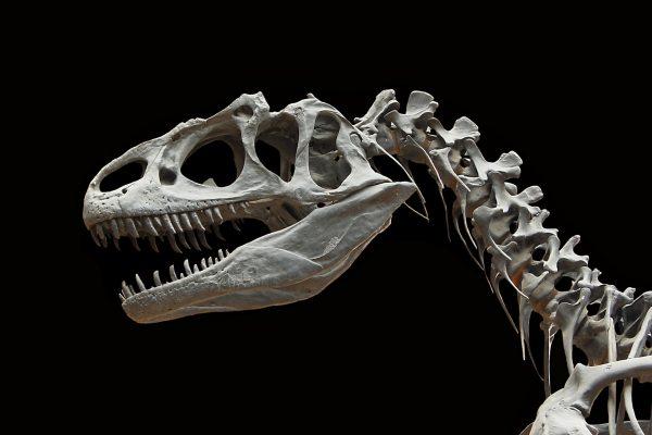 Allosaurus-desktop-wallpaper