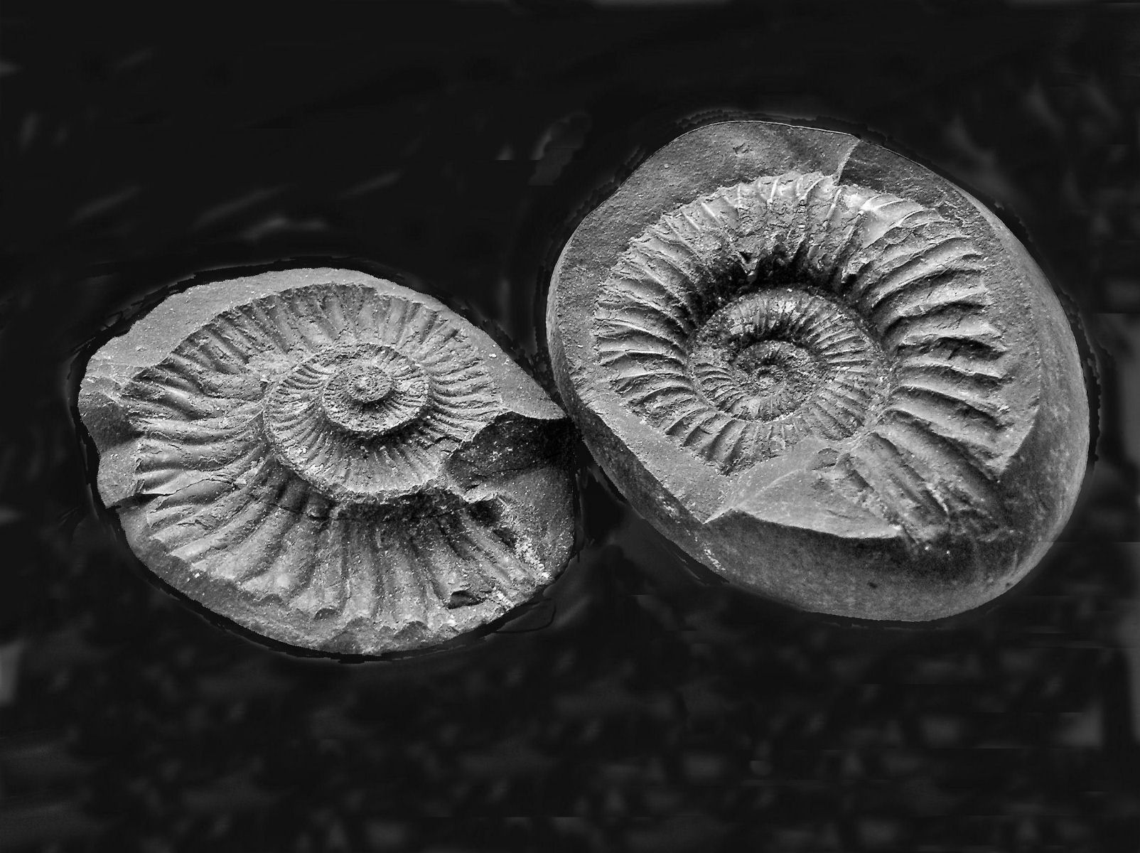 Paleosoc A New Beginning